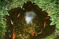Olbrich Botannical Gardens 1