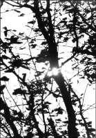 Sunspot -- 10.74