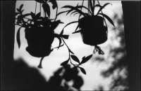 Backlit Plants -- 05.76